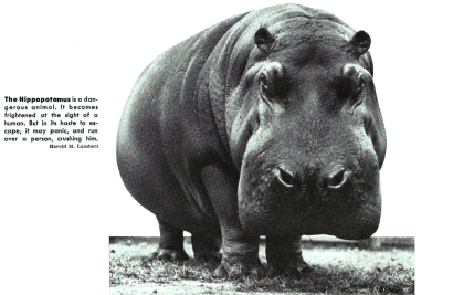 hippo final