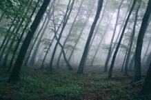 forest-trees-northwestisbest-exploress-large