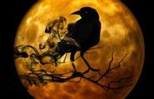 raven-988218__180